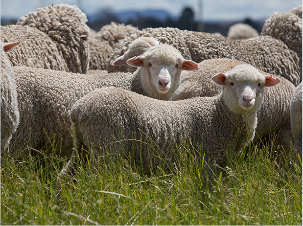 wool-story-1